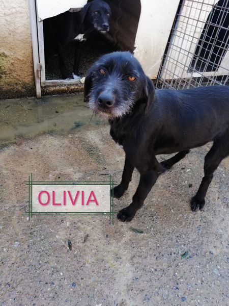 Olivia 3 Anni Mix Drahthaar
