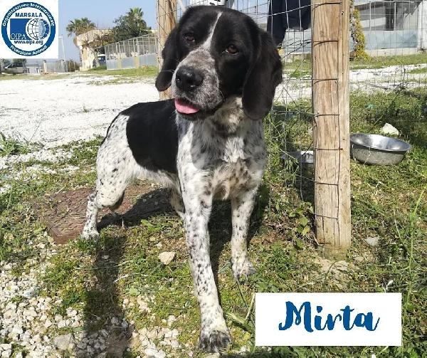 Mirta, taglia media! Foto 1
