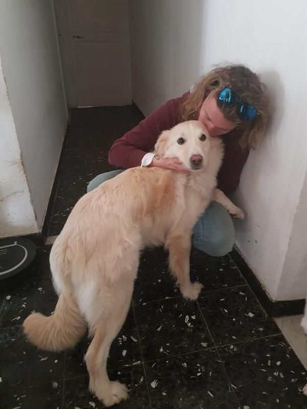 Lady: Dolcissima Simil Golden Retriever